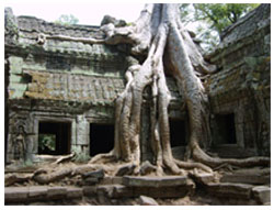 Sevärdheter i Kambodja - Angkor Wat